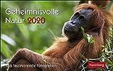 Geheimnisvolle Natur Premiumkalender. Tischkalender 2020. Tageskalendarium Spiralbindung. Format 23 x 17 cm - Harenberg