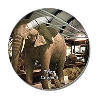 イギリスのトリングにある自然史博物館冷蔵庫マグネットホワイトボードマグネットオフィスキッチンデコレーション