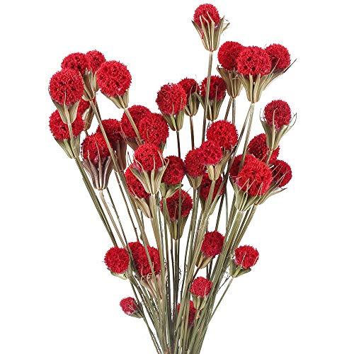 XHXSTORE 2pcs Getrocknete Blumen Craspedia Natürliche Trockenblumen Billy Button Bälle Blumenstrauß für Vase Hochzeit Hause Party Fotografie Blumenarrangement Dekoration Rot