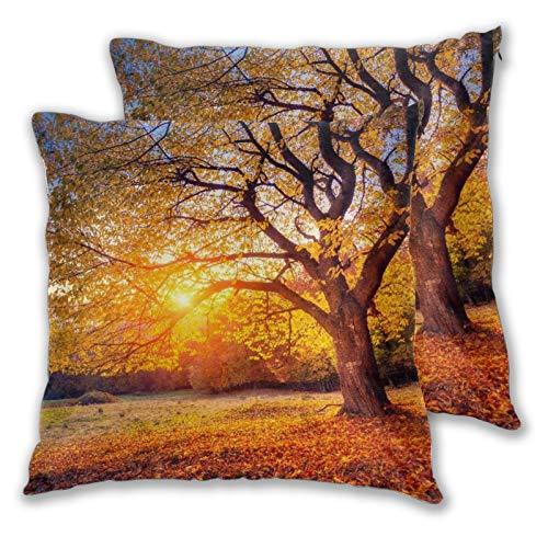 KASABULL 2 Pack Funda de Almohada Árbol de otoño Gran árbol de otoño majestuoso derramando Hojas descoloridas en el Paisaje estacional de la Pendiente de la Colina Lino Suave Cuadrado 45cm x 45cm