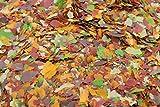 Aquazoo 5 Liter Teich Flocken Flockenfutter Teichflocke Teichfutter Fischfutter 500g