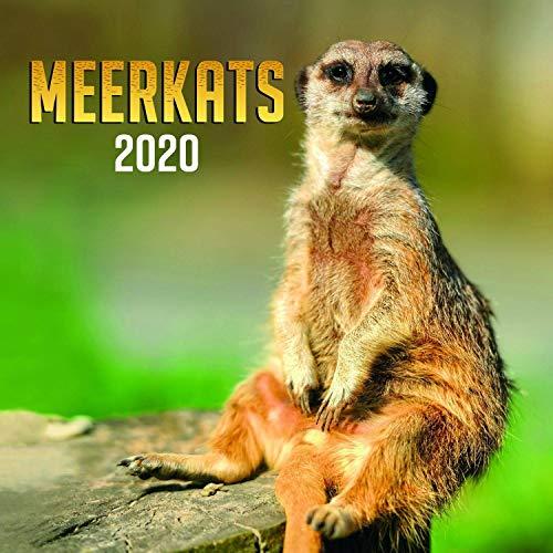 Wildlife Calendar - Calendars 2019 - 2020 Wall Calendar - Photo Calendar - Meerkats Wall Calendar