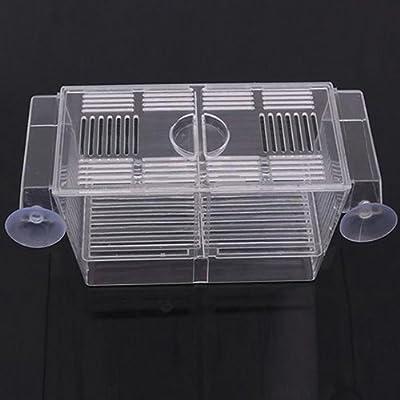Yinong S/M Ablaichkasten aus Plexiglas Fischzucht Isolation Box
