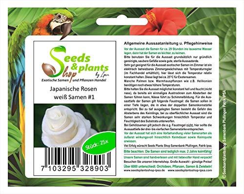 Stk - 25x Japanische Rosen Weiß Blumen Pflanzen - Samen #1 - Seeds Plants Shop Samenbank Pfullingen Patrik Ipsa