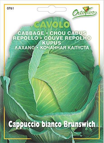 野菜の種 キャベツ