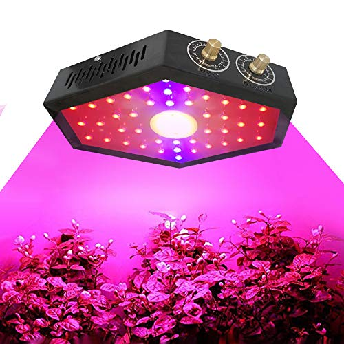 Amazon Explosive New LED Plant Light 1000W COB Spotlight Vegetable and Fruit Plant Indoor Planting Fill Light-black