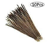 雉の羽根 10本セット 天然 キジ羽 フェザー 30-35cm ナチュラル ハロウィン 仮装 コスプレ 帽子 装飾用 手芸 インテリア