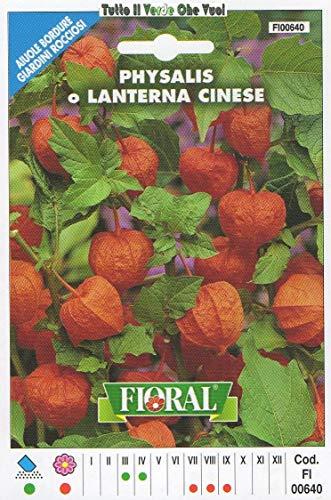 AGROBITS PHYSALYS LANTERNA Cinese- AIUOLE Bordure Giardini ROCCIOSI-Floral - A SEMENT