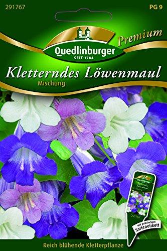 Löwenmaul Kletterndes- Mg. - Asarina scandens QLB Premium Saatgut Blumenmischung