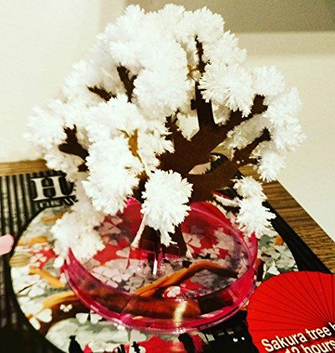 Hanami - Albero magico Sakura, Cartone, bianco