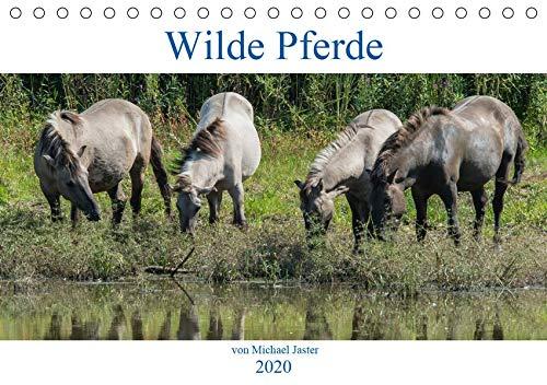 Wilde Pferde von Michael Jaster (Tischkalender 2020 DIN A5 quer): Wilde Pferde von Michael Jaster sind frei und ungezähmt. (Monatskalender, 14 Seiten ) (CALVENDO Tiere)