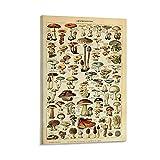HUAIREN Póster educativo vintage de seta seca para niños, lienzo para decoración de la habitación, habitación familiar, cuarto de baño, 40 x 60 cm