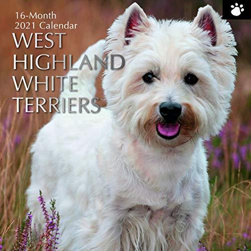 2021 Wall Calendar - West Highland White Terriers Calendar