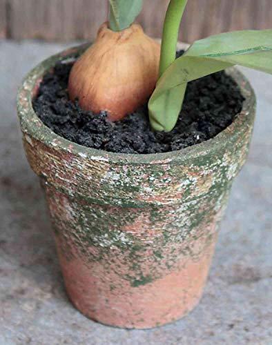 artplants.de Kunsttulpe MYA im Tontopf, Creme-rosa, 25cm - Textilblume/Kunststoff Tulpe - 3