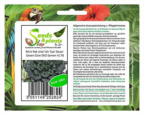 Stk - 600x Mini Pak choi Tah Tsai Tatsoi Green Coin EKO B. Gemüse Kohl K176 - Seeds Plants Shop Samenbank Pfullingen Patrik Ipsa
