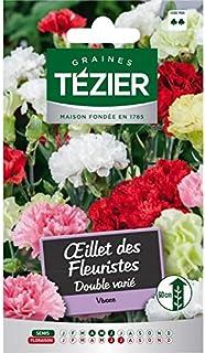 Tezier - Oeillet des Fleuristes double varié - Fleurs vivaces