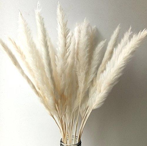 Getrocknetes Pampasgras | 60cm weiß - 2
