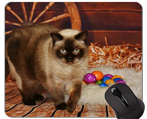 Mauspads und Cute Cat Gaming Maus-Pads Starte mit neuen Visitenkarten ins Jahr 2012!