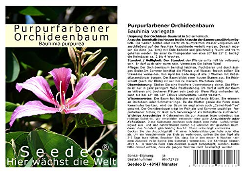 Seedeo Purpurfarbener Orchideenbaum (Bauhinia purpurea) 10 Samen