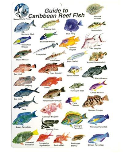 Trident Scuba Caribbean Reef Fish ID Slate Card