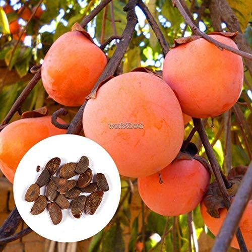 Portal Cool 10 pc/sacchetto: semi giardino della casa Pianta Delicious albero di cachi Semi Diospyros frutta Wst