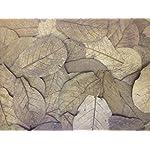 100-Stck-Seemandelbaumbltter-10-20cm-BLITZVERSAND-im-Karton-Seemandellaub-Catappa-Leaves
