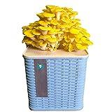 ZXCAM Kit de Culture de Champignons huîtres, Kit de Culture de Champignons en intérieur, Kit de Spawn de mycélium de Spores de Champignons, Environ 15-25 Jours(4)