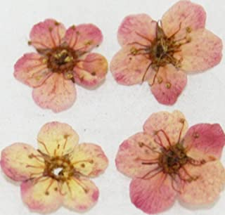 Zink Color Nail Art Dried Flower Plum Blossom Pink 4Pc Embellishment
