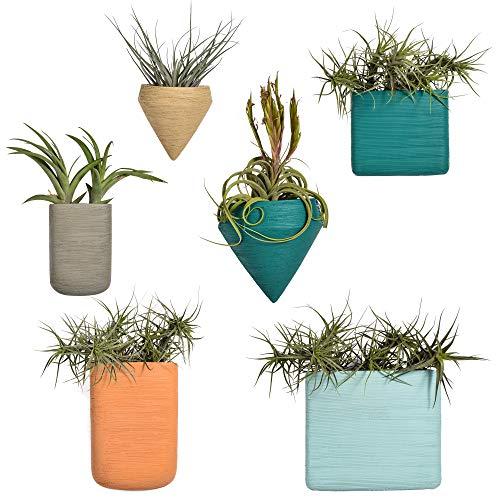 Ecosides 4 X Geométricas Macetas Pared Resina Cestas Colgantes, Suculento Cactus Maceteros Pequeños para Hierbas Flores Plantas Casa y Jardín Porche Boda Pared Decor Uso en Interior Exterior,Vistoso