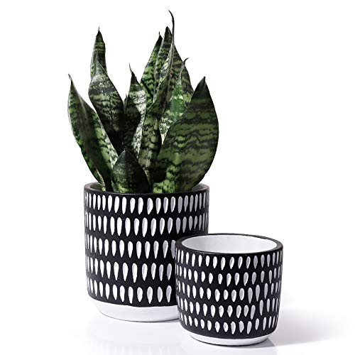 Cement Planter Pots for Plants Indoor - 6 + 4.5 Inch Indoor Concrete Vintage Style Dot Patterned Planters Bonsai Container with Drainage Hole(POTEY 055601, Plants NOT Included)