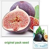 6 semillas de higo púrpura, semillas de la fruta y la higue