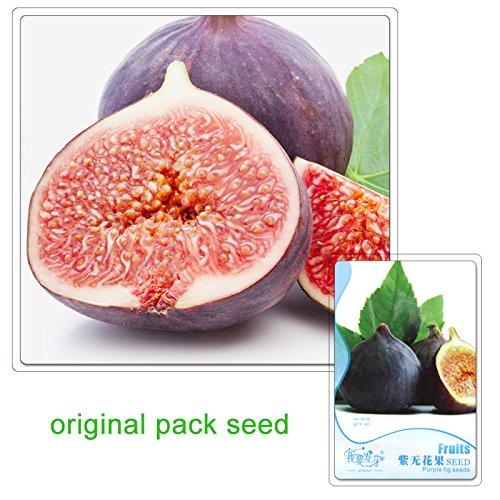 paquete original 6 semillas / bag, semillas de higo púrpura, semillas de la fruta y la higuera frutas orgánicas fruta nutritiva árbol bonsai