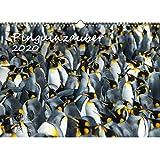 Pinguinzauber DIN A3 Kalender 2020 Pinguin - Seelenzauber