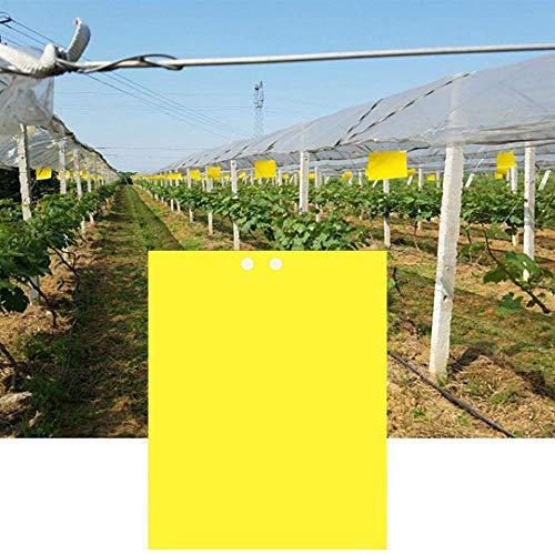 Homo Trends Lot de 10 pièges à mouches jaunes adhésifs double face de 20 x 24 cm