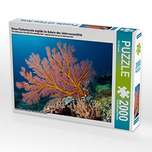 CALVENDO Puzzle Diese Fächerkoralle erglüht im Schein des Unterwasserblitz 2000 Teile Lege-Größe 90 x 67 cm Foto-Puzzle Bild von Ute Niemann