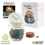 GROW2GO Cactus Starter Kit - Juego de plantación de mini-invernadero, semillas de cactus y tierra - idea de regalo sostenible para los amantes de las plantas (Pleiospilos Nelii)