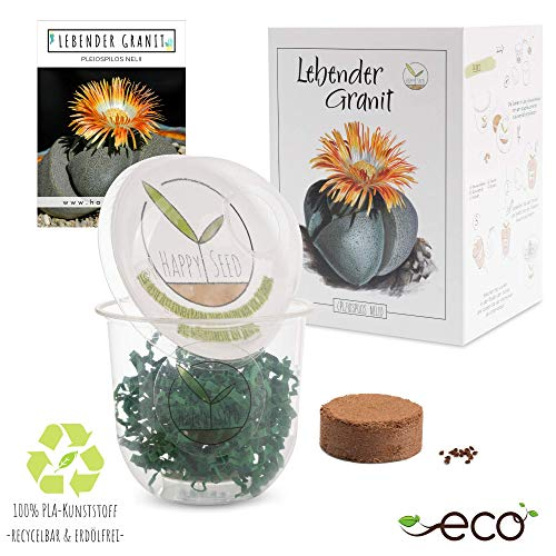 GROW2GO Kakteen Starter Kit Anzuchtset - Pflanzset aus Mini-Gewächshaus, Kaktus Samen & Erde - nachhaltige Geschenkidee für Pflanzenfreunde (Lebender Granit)