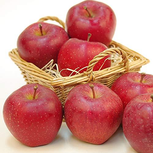 国華園 食品 りんご 青森産 スターキング 10kg 1箱