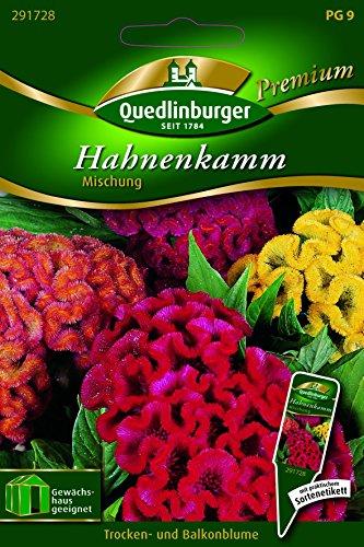 Hahnenkamm Mischung - Celosia cristata QLB Premium Saatgut Blumen einjährig