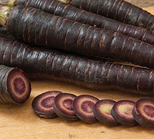 Violet 68 Carotte (F1 hybride) non-OGM Racine Potager semences traitées (~ 100 graines)