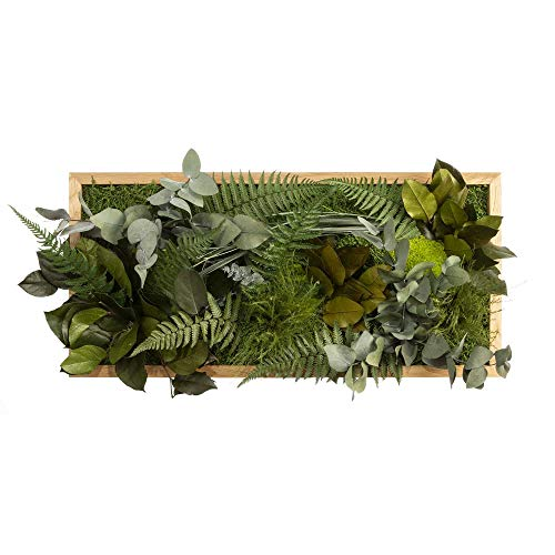 Moos Moos Manufaktur Moosbild ´Dschungel´ - Bildgröße 57 x 27 cm mit Rahmen aus geölter Eiche
