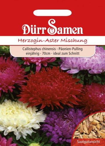 Dürr-Samen Herzogin-Aster Mischung