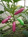 Bloom Green Co. 30 piezas de bonsái de calabaza rara, planta de calabacín redondo, bonsái de la herencia orgánica Planta en maceta vegetal para las plantas de semillas de flores de jardín de casa: 3