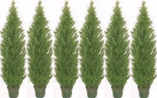 Cheap mail order specialty store Six 7 Foot Artificial Cedar Topiary Indoor Potted Outdo Genuine Trees or