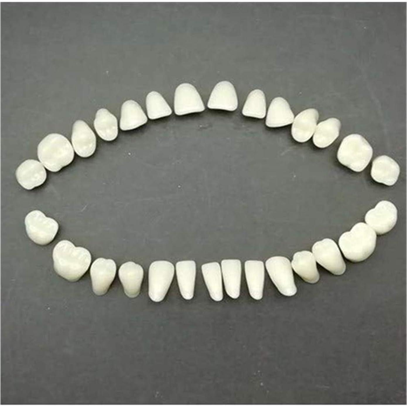 永続麦芽絶壁QITOO 歯 入れ歯 歯 歯 アクリル 樹脂 歯 フルセット ハロウィン ホラー 小道具