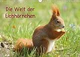 Die Welt der Eichhörnchen (Posterbuch DIN A4 quer)