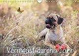 Vermopst durchs Jahr (Wandkalender 2020 DIN A4 quer): Möpse, keiner wie der andere! (Monatskalender, 14 Seiten ) (CALVENDO Tiere)