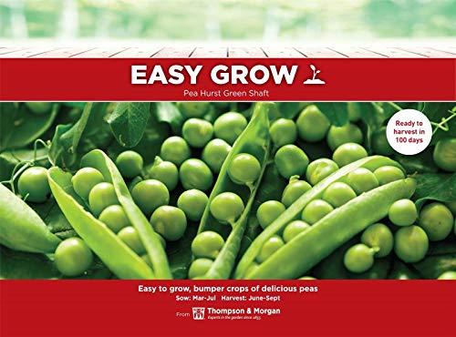 Portal Cool Thompson & Morgan EasyGrow - Hurst Green Pea Arbre - 250 graines