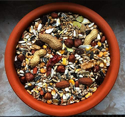 cura-canin 10 kg natürliches Eichhörnchen Futter in Premium Qualität Eichhörnchenfutter der Spitzenklasse Streufutter Futterhaus