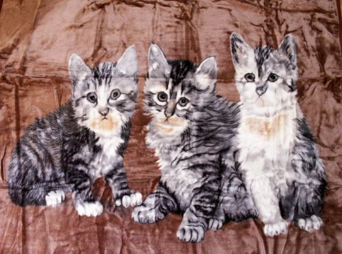 Natur-Fell-Shop Kuscheldecke Tagesdecke Decke Motiv Katzen I 160x200cm